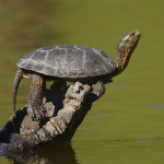 How to Build a Turtle Pond
