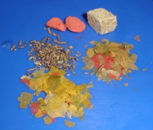 Aquarium_-_dried_food2