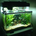 How to Clean An Aquarium – Everything You Need to Know to Keep Your Aquarium Clean