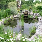 How to Build a Pond – A Beginners Guide to Building the Perfect Backyard Pond