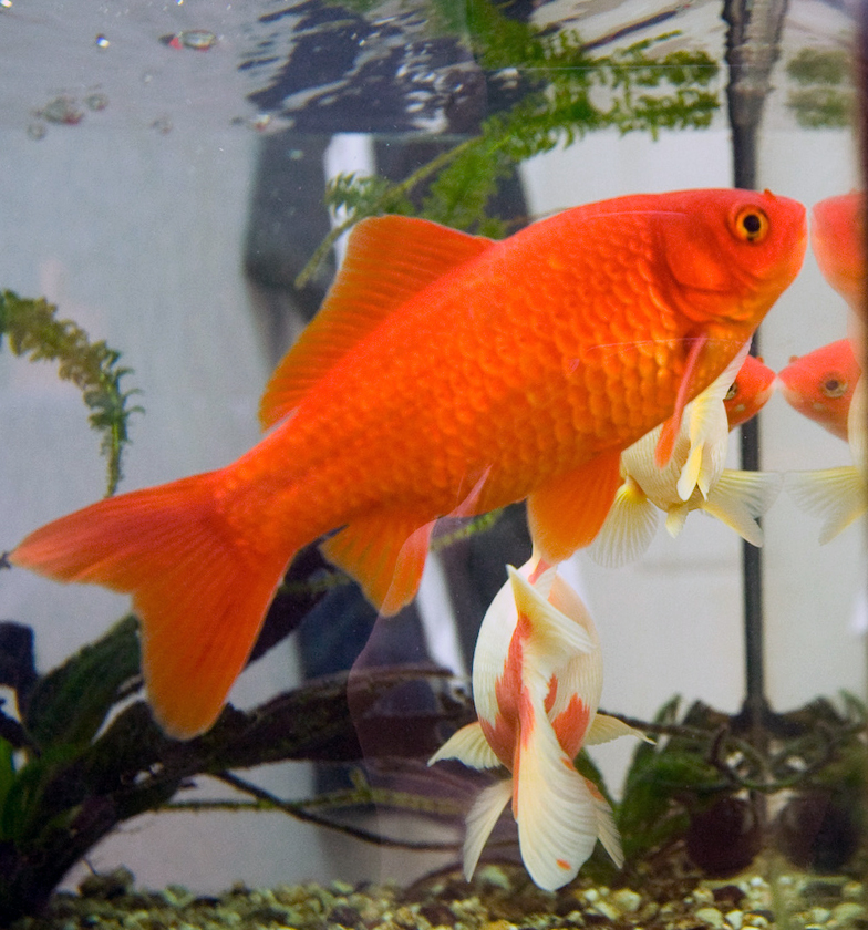 The best fish to stock a pond with aquarium tidings for What kind of fish live in ponds