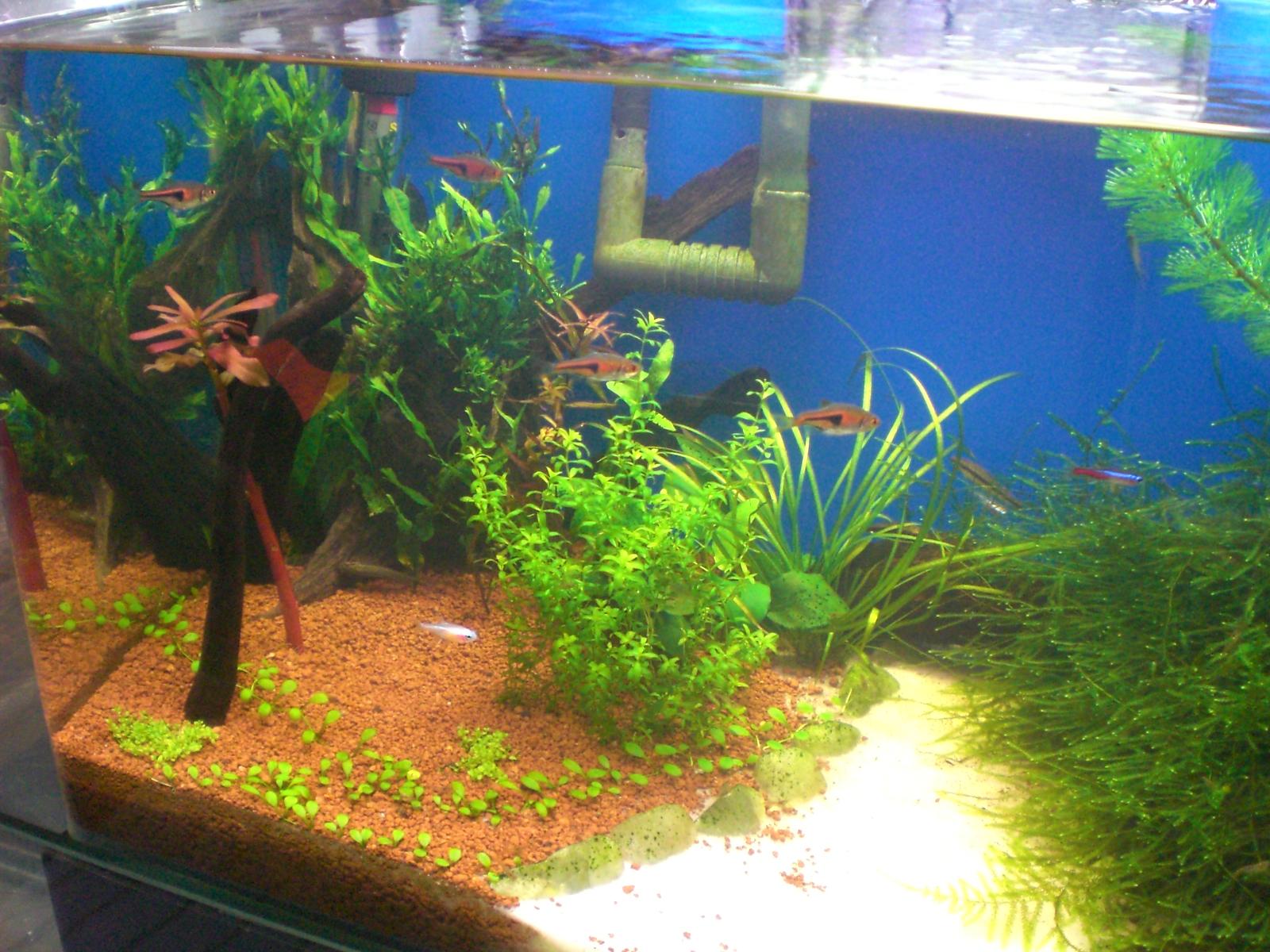 Aquarium fish tank sand -
