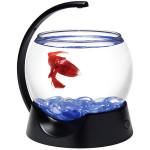 How to Choose a Betta Bowl