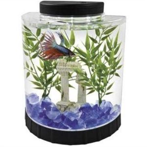 betta aquarium