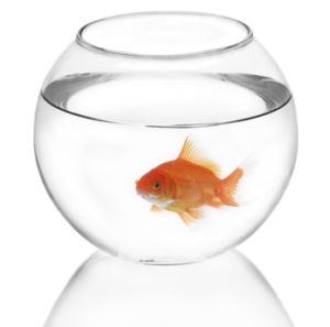 And no, a fish bowl doesn't count as a quarantine tank. ©Fotolia