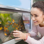The Best Beginner Fish For Freshwater Aquariums