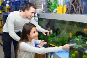 Ordinary happy positive smiling customers selecting tropical fish in aquarium tank
