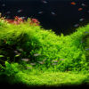 The Best Algae Eaters for Aquariums