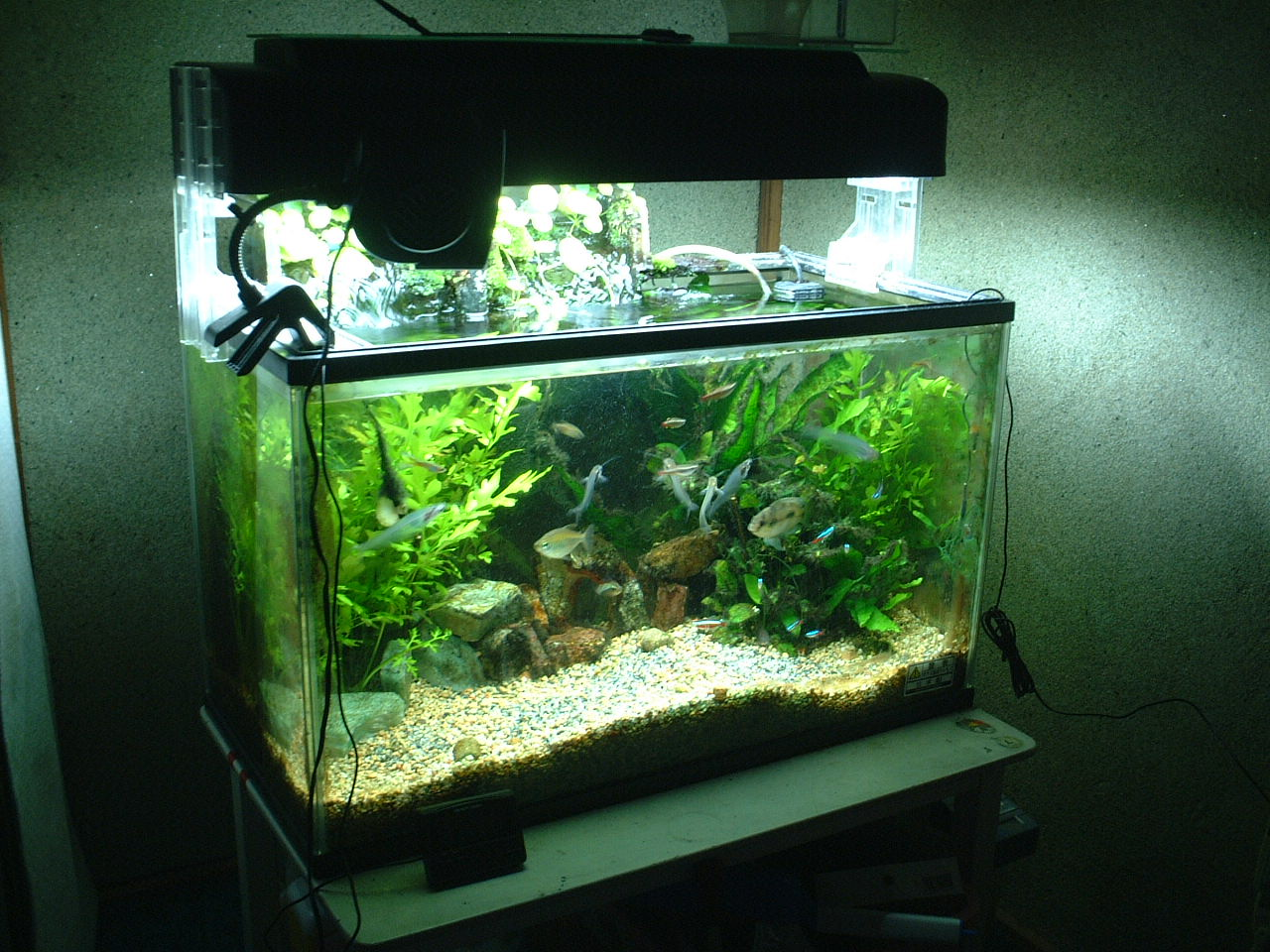 How To Clean An Aquarium U2013 Everything You Need To Know To Keep Your Aquarium  Clean