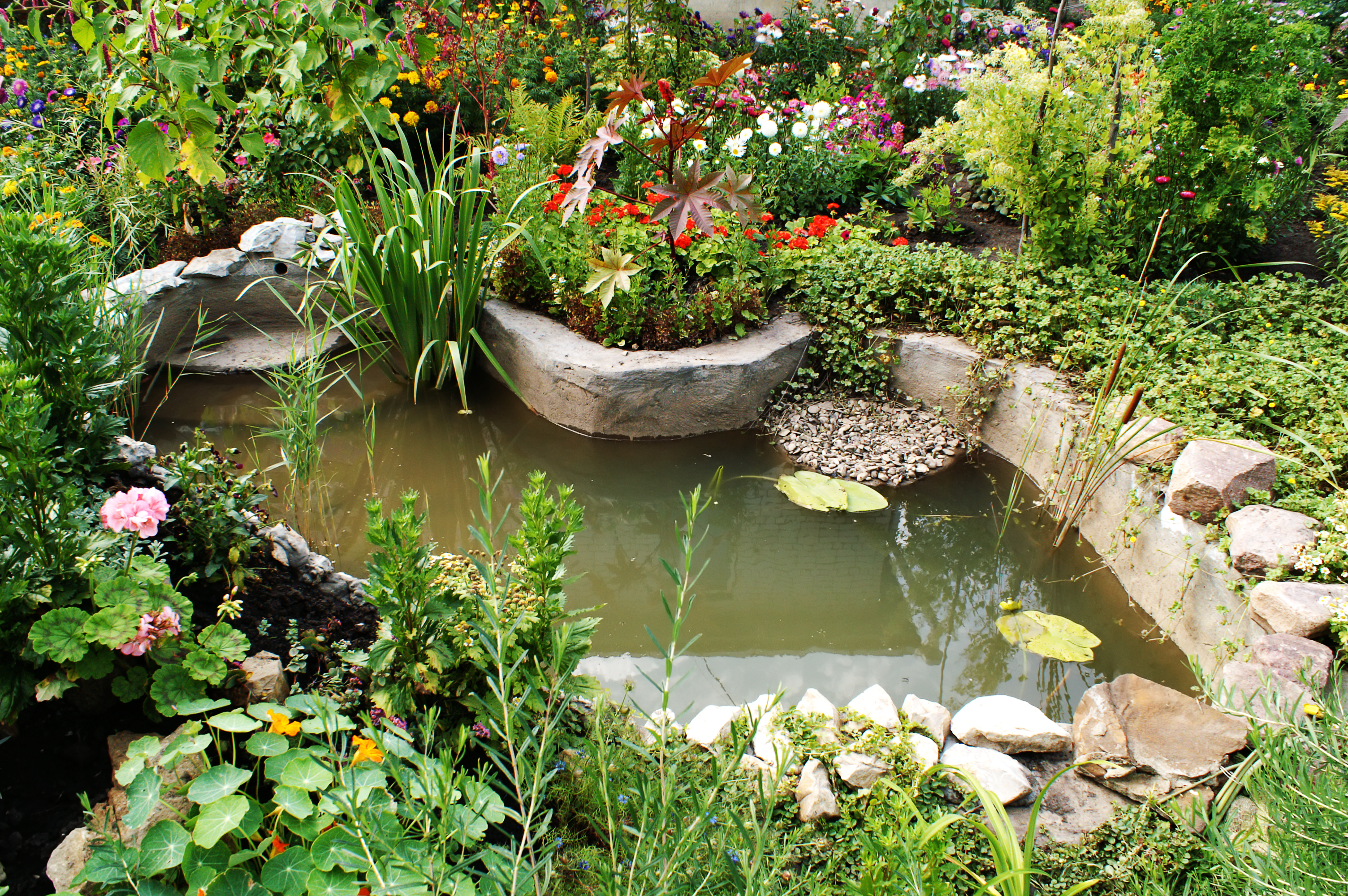 How to build a pond a beginners guide to building the for Putting a pond in your backyard