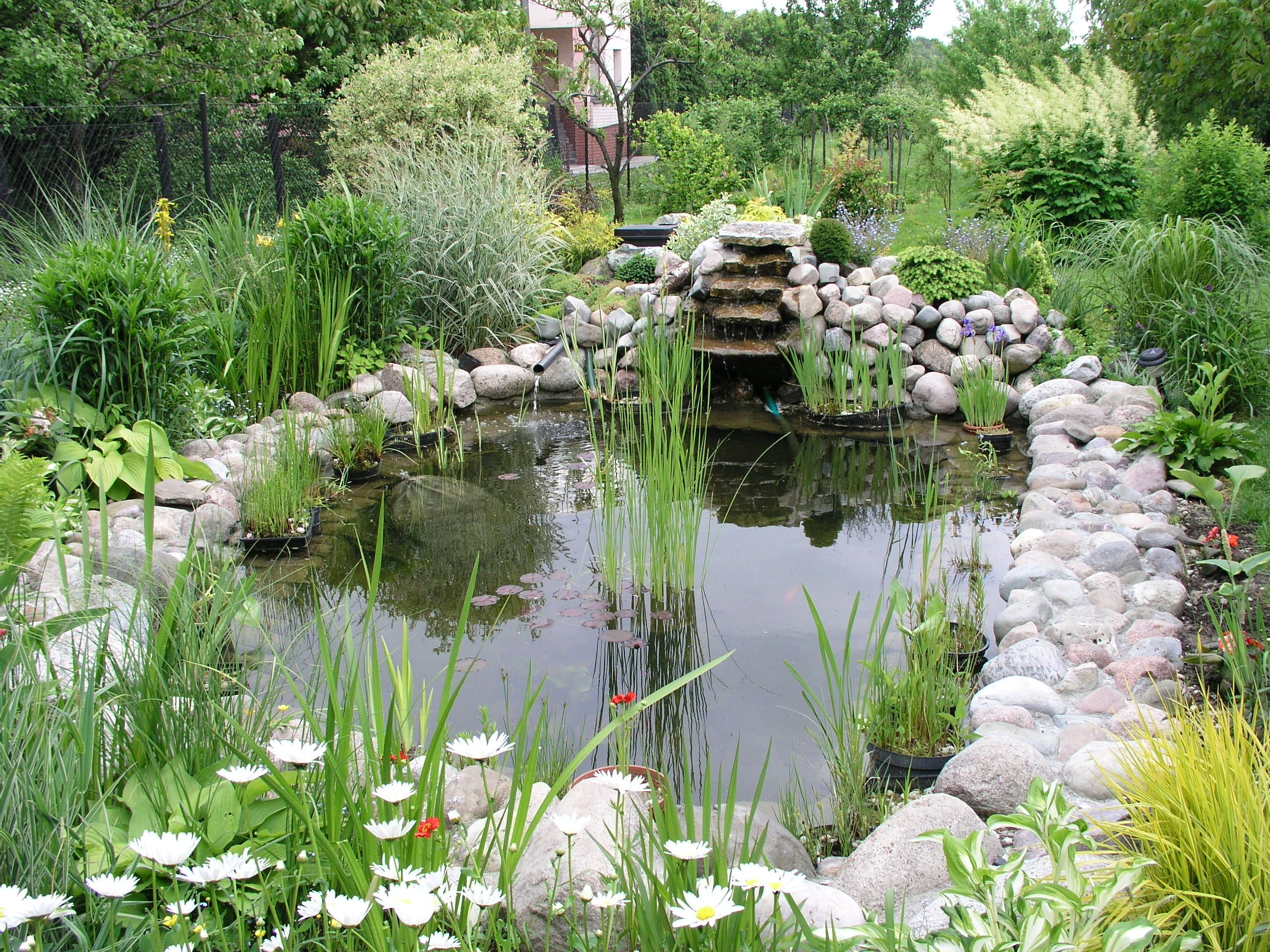 How to build a pond a beginners guide to building the for Koi pond depth