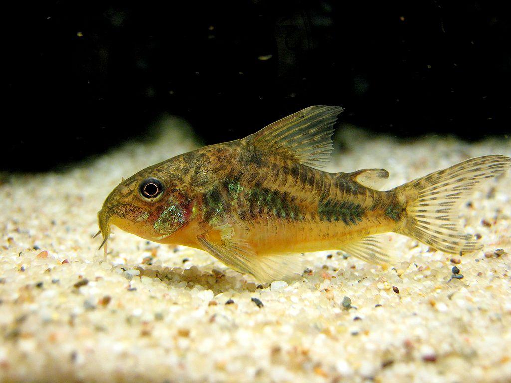 Aquarium for sale in bangalore dating 7