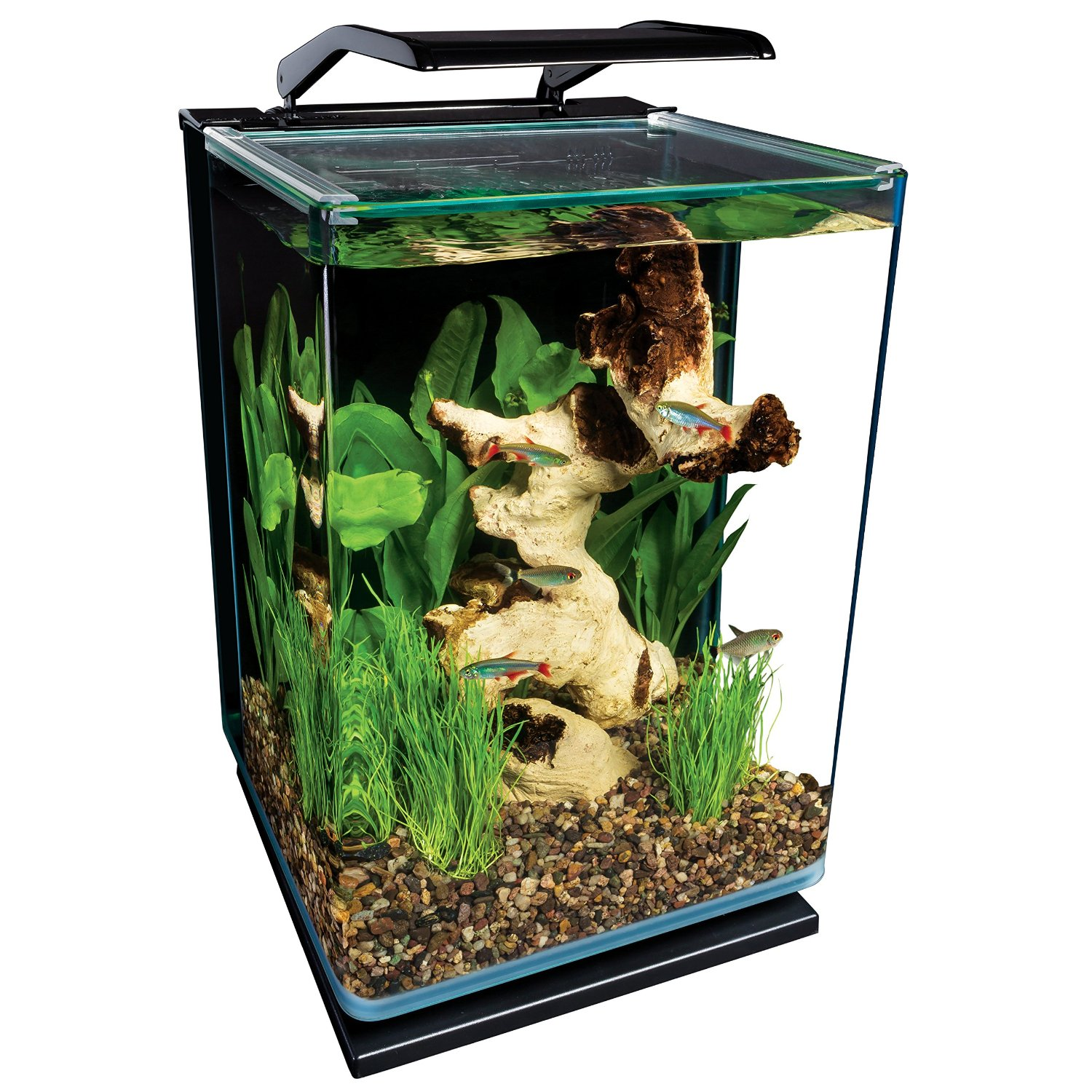 Where to find affordable aquariums online aquarium tidings for Where to buy pet fish