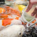 Why You're Probably Overfeeding Your Fish (And What to Do About It)
